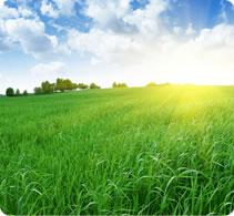 farm-seeds-general-purpose-long-term-lrg