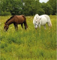 Horse Mixtures