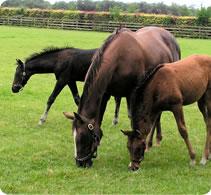 horse-seeds-newbury-paddock-lrg