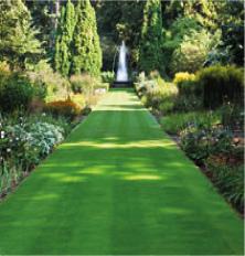 Lawn Seeds & Amenity