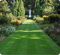 lawn-seeds-short-landscape-lrg