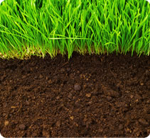 organic-seed-mixtures-short-term-organic-lrg